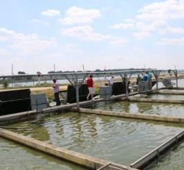 黄海全潜式渔业养殖无损检测项目